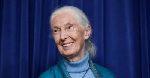 'Religion entered into me': A talk with Jane Goodall, 2021 Templeton Prize winner