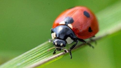 Insektensommer: Was summt und krabbelt wird gezählt