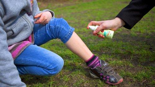 Zecken: Wirksamer Schutz vor Stichen und Krankheiten