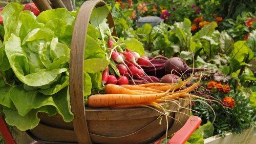 Gemüse pflanzen: Die wichtigsten Tipps für den Anbau