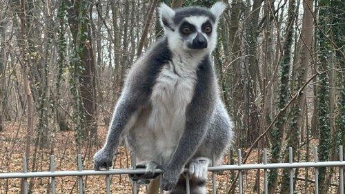 Landeszootag: Freier Eintritt für Kinder in 19 Tierparks in MV