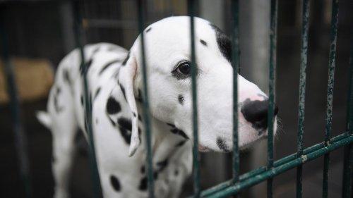 """Tierheime kämpfen mit """"Lockdown-Laune"""""""
