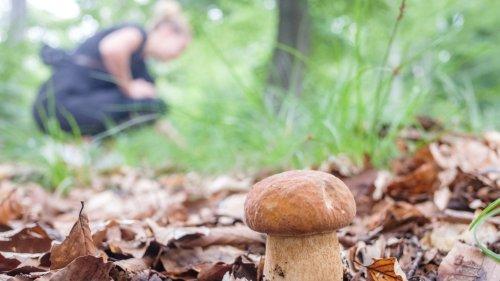 Polizei rettet verirrte Pilzsammlerin aus Wald bei Neustrelitz