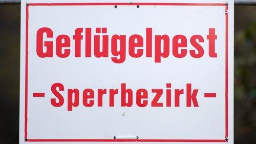 Erster Fall von Geflügelpest in Schleswig-Holstein in diesem Herbst