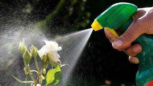 Einigung im Bundestag: Mehr Schutz für Insekten soll kommen