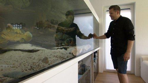 Herr Hohmann und die Fische: Eine Rochenzucht im Wohnzimmer