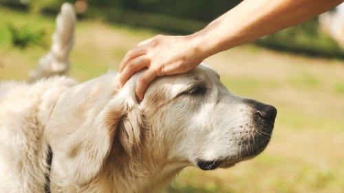 Haustiere versichern: Welche Police ist empfehlenswert?