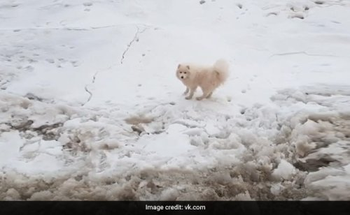 Lost Dog, Stranded On Arctic Ice, Rescued By Russian Sailors