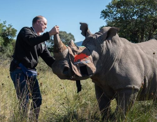 Fighting Poachers By Making Rhino Horns Radioactive
