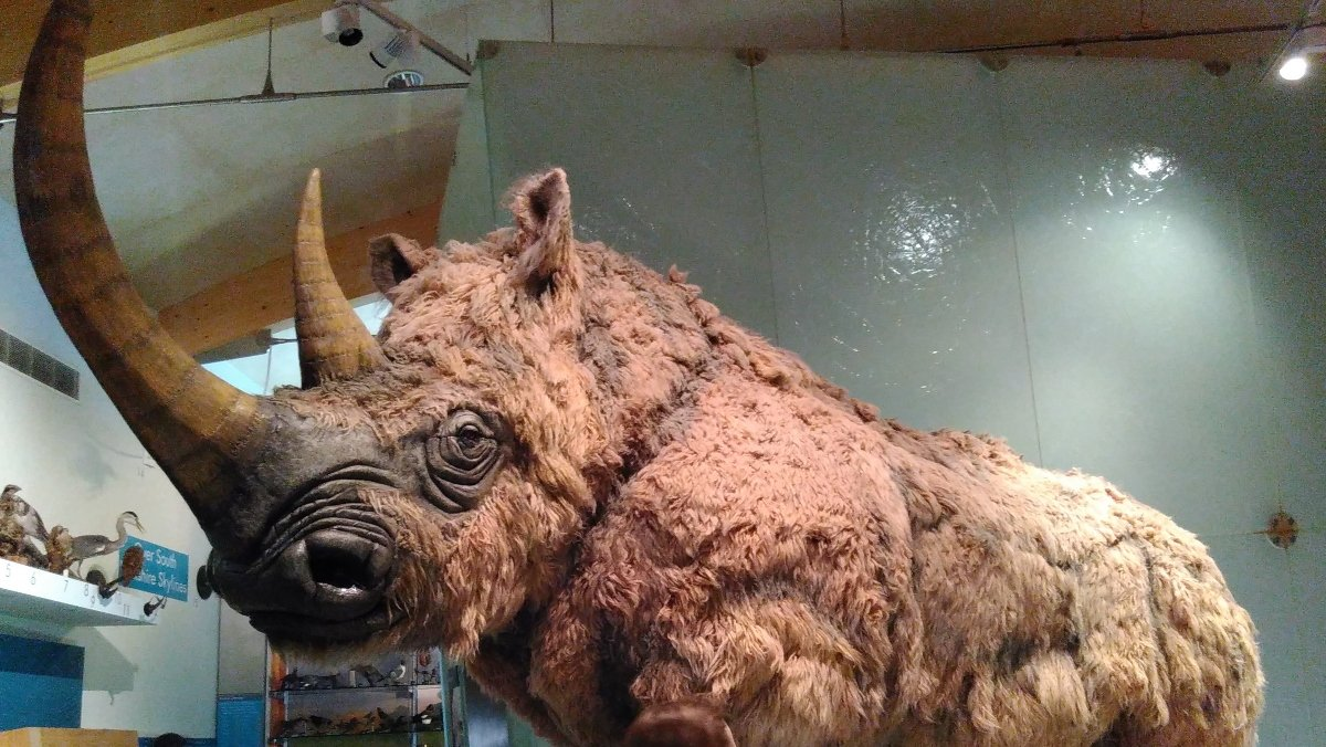 14,000-Year-Old Dog Ate Woolly Rhino as its Last Meal - Nerdist