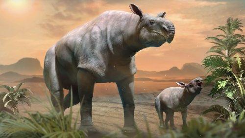 Giant Rhino Found in China Was Largest Land Mammal Ever - Nerdist
