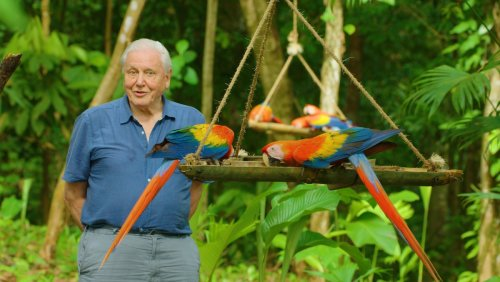 New David Attenborough Nature Doc LIFE IN COLOR Drops Trailer - Nerdist