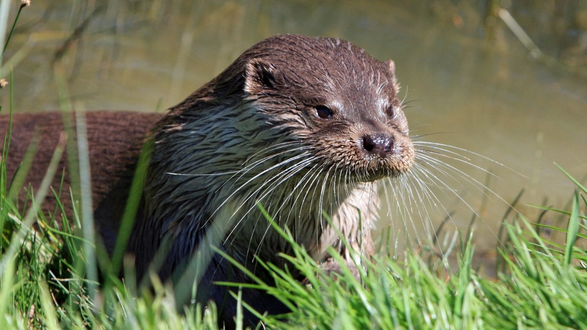Here's How Sea Otters Keep Their Tiny Bodies Warm - Nerdist