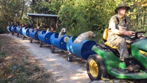 Watch Good Dogs Take a Ride on Their Own Custom Train - Nerdist