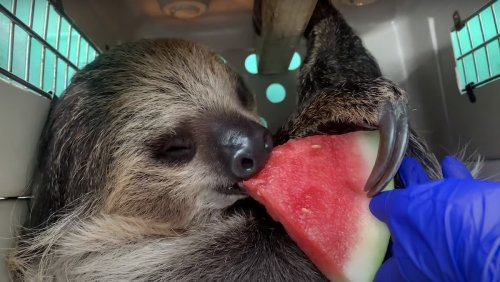 Enjoy Watching Adorable Tiny Animals Eat Watermelon - Nerdist
