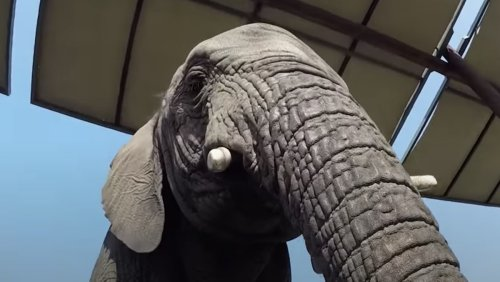 Watch Hungry Elephant Burst Into a Kitchen Like the Kool-Aid Man - Nerdist