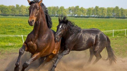 Genetic Analysis Reveals Origin of All Domesticated Horses - Nerdist