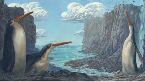 Field Trip Fossil Find Reveals New Species of Giant Penguins - Nerdist