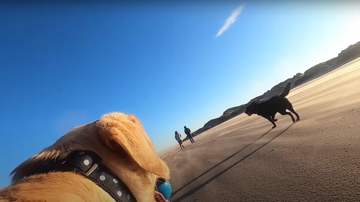 Dog GoPro Videos Let Us Explore Life Through Canine Eyes - Nerdist