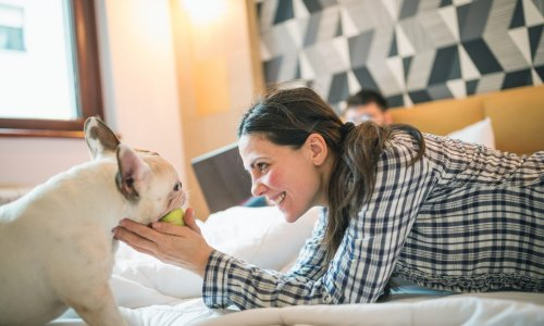 Hotel and Flight Tips for Traveling with Pets