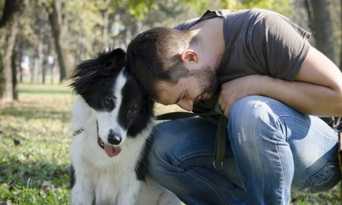 Why Your Dog Needs Liability Insurance Even if She's Perfect - NerdWallet