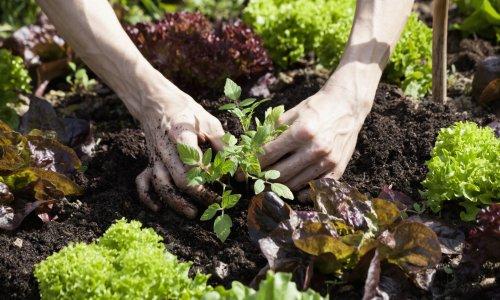 A Garden's Lessons for Growing Money - NerdWallet