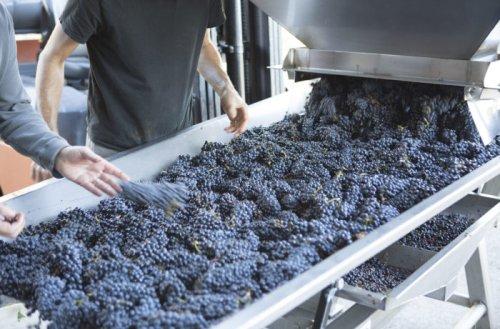 11 Editors' Choice Oregon Pinot Noir Picks