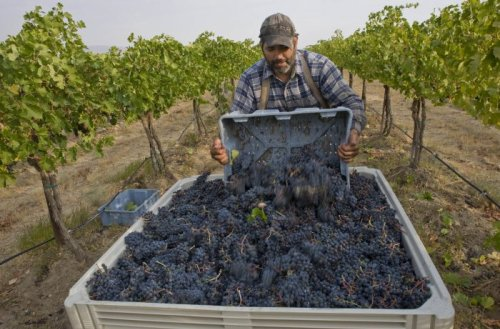 An Armchair Traveler's Guide to Washington State Wine Country   Wine Enthusiast