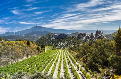 A Guide to the Wines of the Southern Rhône