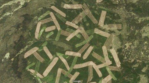 Google Maps: Darum ist dieser Wald gestreift