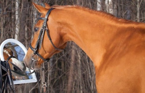 Horses Can Recognize Themselves in a Mirror - Neuroscience News