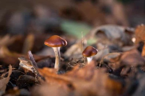 Psilocybin Performs At Least As Well as Leading Antidepressant in Small Study - Neuroscience News