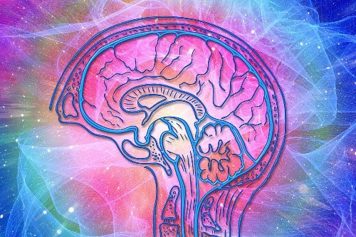 Hormones Are Key in Brain Health Differences Between Men and Women