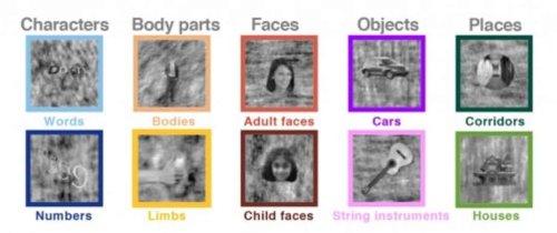 Children Recycle Brain Regions When Acquiring New Skills