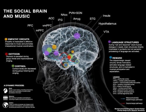 What Happens in the Brain When People Make Music Together? - Neuroscience News