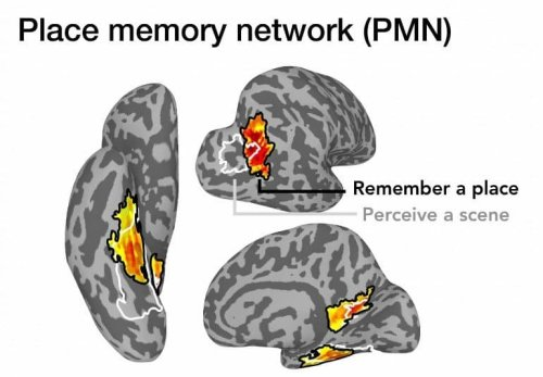 Study Reveals Where Memories of Familiar Places Are Stored in the Brain - Neuroscience News