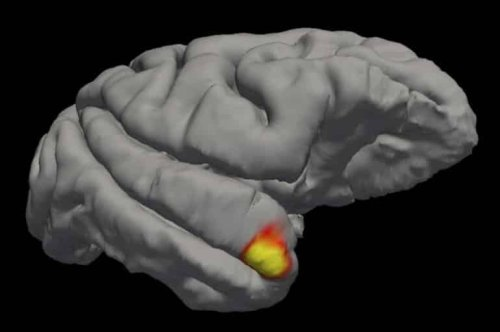 Scientists Discover a New Class of Memory Cells in the Brain - Neuroscience News