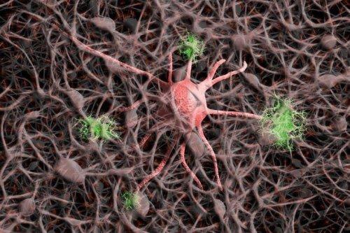 New Microscopy Technique Reveals Activity of One Million Neurons Across the Mouse Brain - Neuroscience News