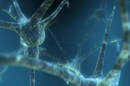 Researchers Identify Unique Characteristics of Human Neurons - Neuroscience News