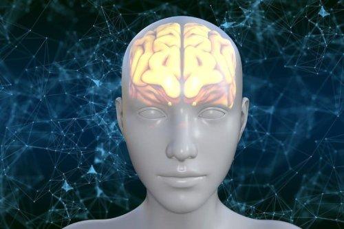 Fundamental Roles of Glucosamine in Brain Revealed - Neuroscience News