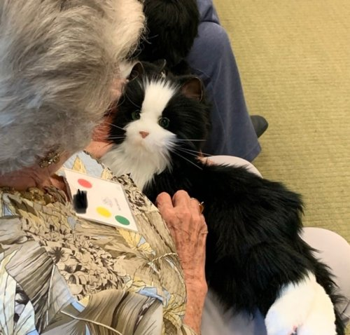 Robotic Pet Boosts Mood, Behavior and Cognition in Adults With Dementia