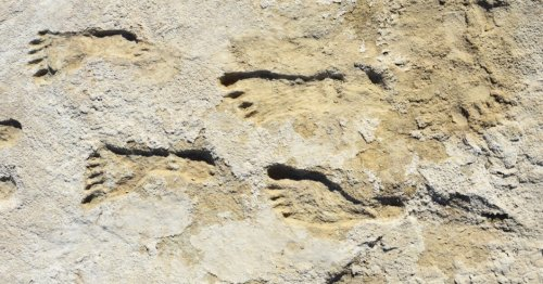 Fossil footprints mark earliest clear evidence of humans in North America