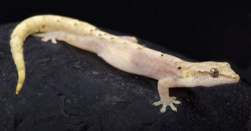 CRISPR stem cell therapy grants lizards new regeneration powers