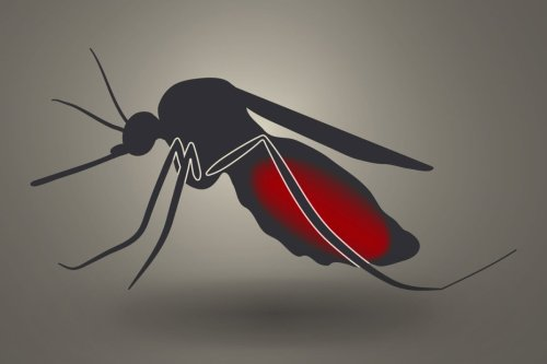 """WHO announces """"historic"""" roll-out of first malaria vaccine in Africa"""