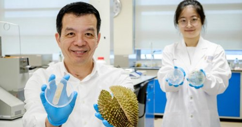 Germ-killing, wound-healing, low-cost bandage made from durian husks