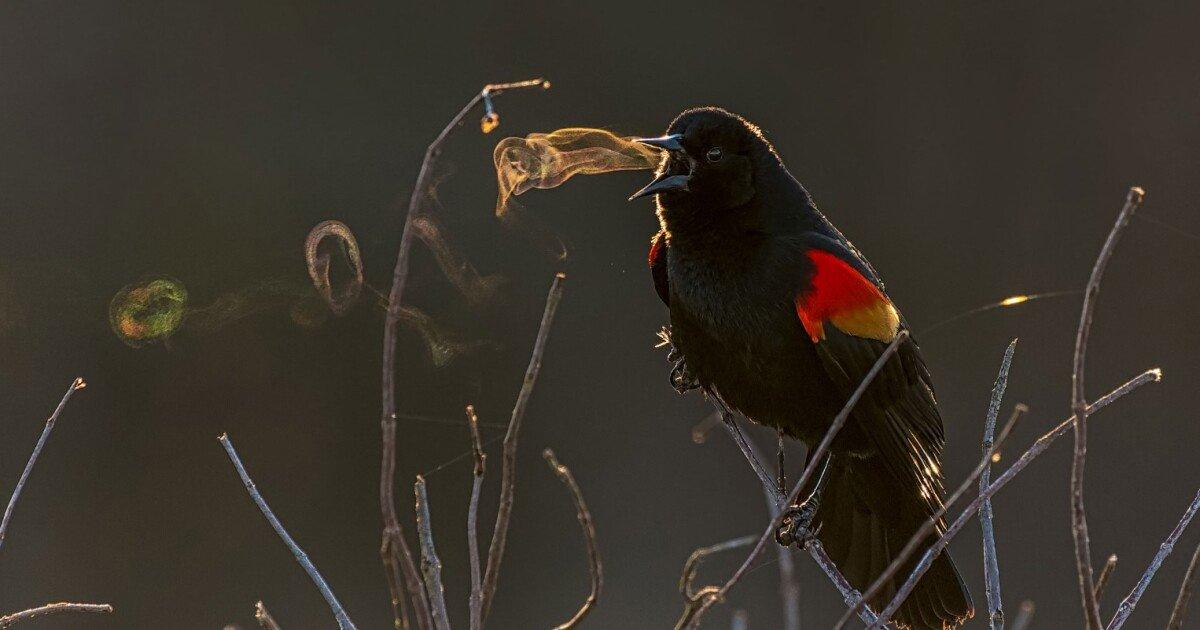 2019 Audubon Photography Awards include new prizes – and plenty of amazing bird pics