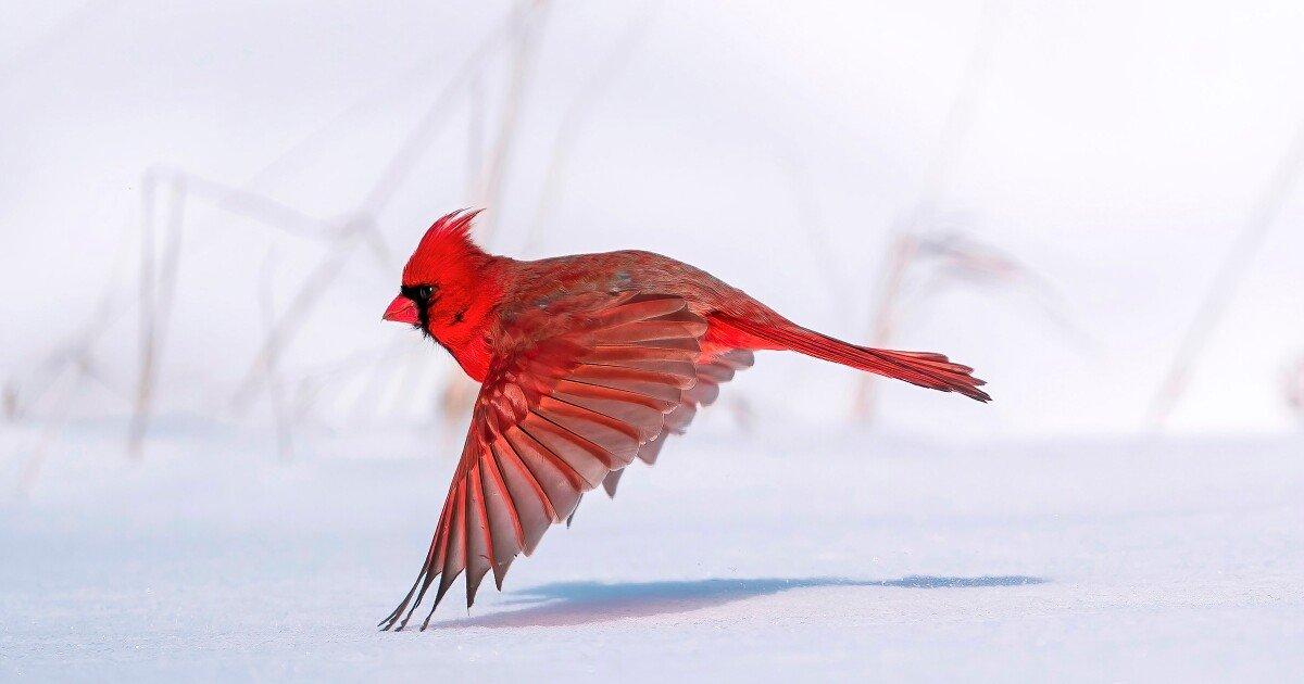 Breathtaking bird photography in the 2021 Audubon Awards