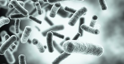 Experimental vaccine forces bacteria down an evolutionary dead end