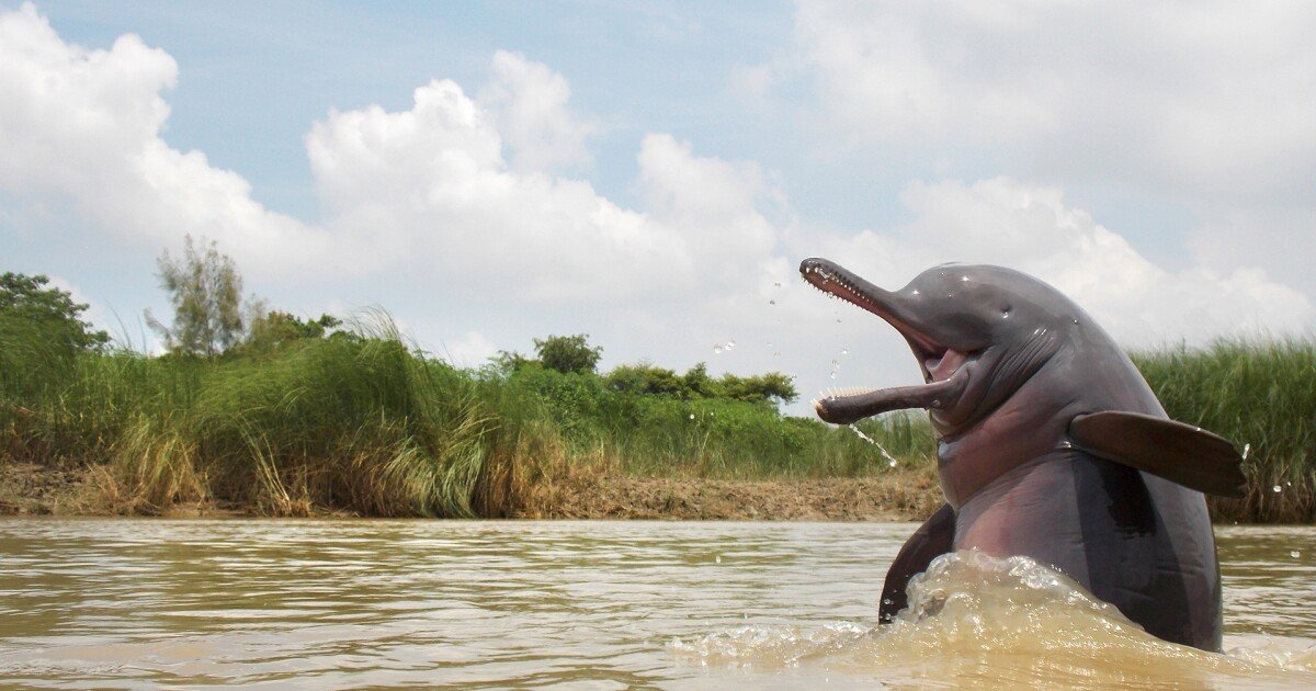 Wondrous wildlife: The 2020 Nature inFocus photo award winners