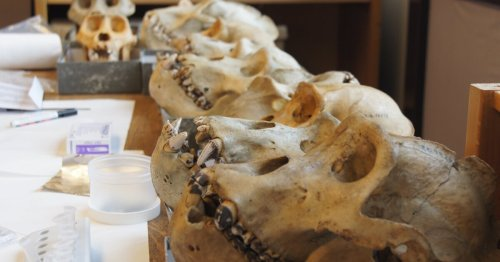 100,000 year-old Neanderthal oral microbiomes reveal evolutionary clues